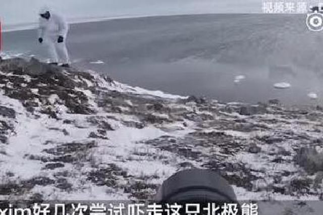 """战斗民族摄影师徒手吓走北极熊 实力演绎""""北极怂"""""""