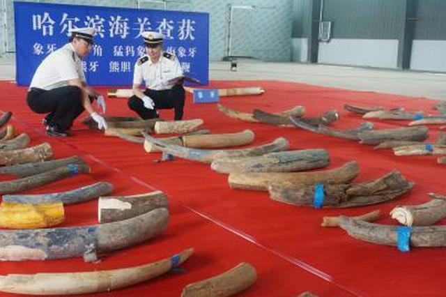 哈尔滨海关破获一特大涉嫌走私濒危动物制品案