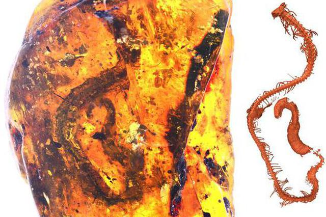 世界首次!琥珀中发现9900万年前未知的蛇类物种标本