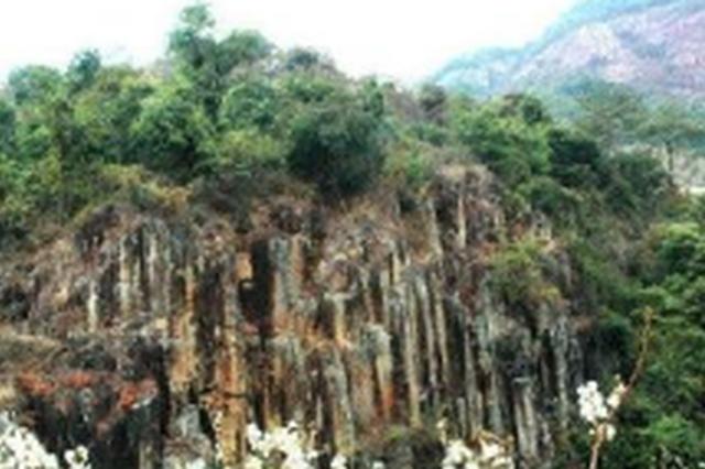 吉林珲春东北虎保护区回应违规开发毁林:全力整改