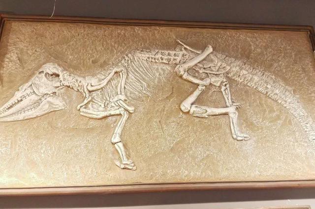 吉林延吉龙山恐龙化石点发现新的鳄形类头骨化石