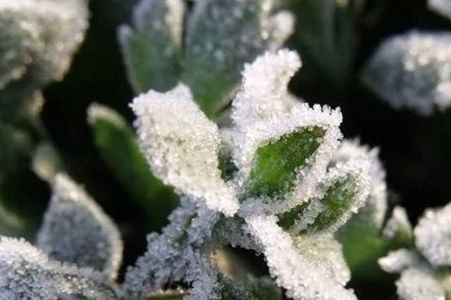 吉林省21个县市发布霜冻预警!今年初霜冻来的早一些