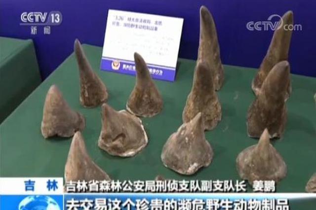 吉林警方破获非法收售濒危野生动物制品案