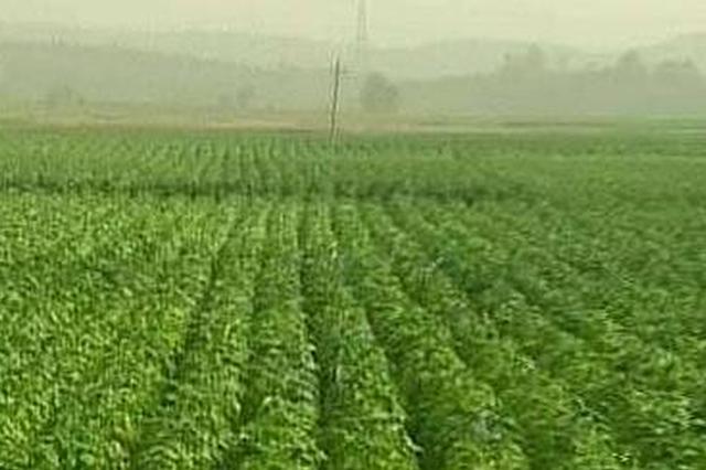 中青报:烟草产量增加 不该由烟草部门自己说了算