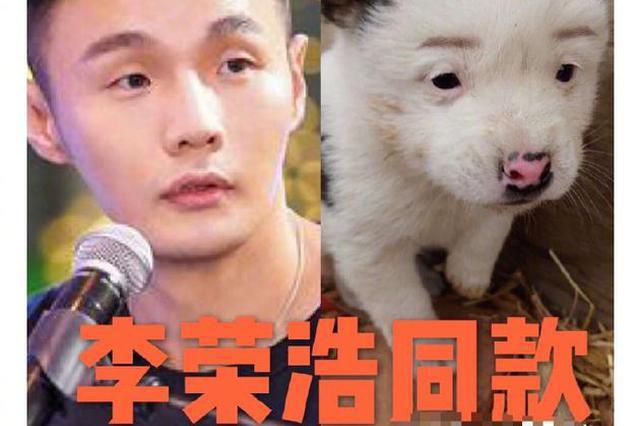 """李荣浩""""同款""""狗狗售价1元 本尊:为什么那么便宜"""