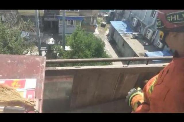 长春一居民阳台上多只蝙蝠安家 住户害怕求助消防