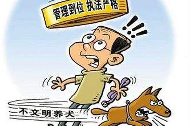 长春市公安机关开展整治专项行动 非法养犬要被处罚