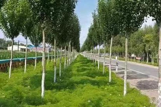 吉林省24个乡镇创建国家卫生乡镇通过省级评审