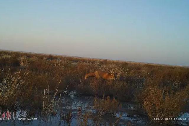 多种野生动物重现大布苏保护区