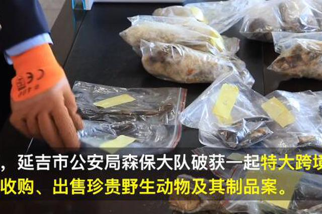 320万!延吉警方破获特大跨境收售野生动物制品案!