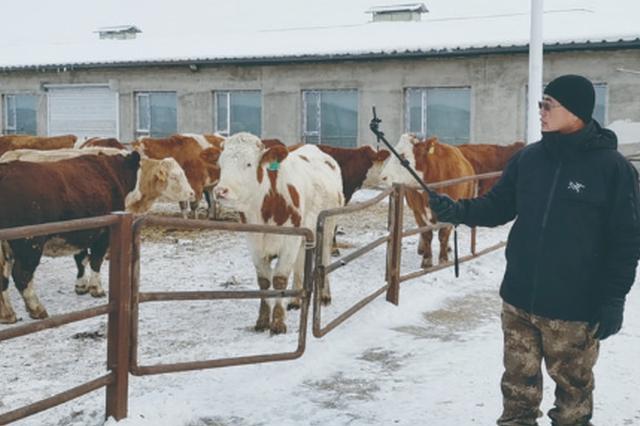 德惠男子直播卖牛 半年营业额高达400万元