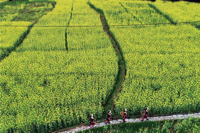 梯田,村寨,油菜花……春天真的可以这么美