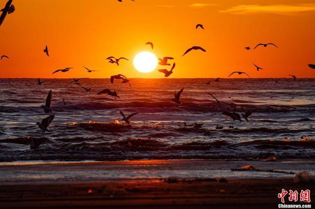 春至候鸟归北戴河新区湿地候鸟云集