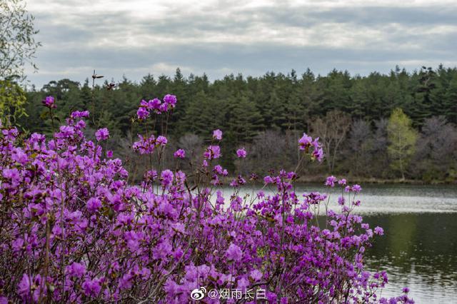 长白景色——竹外桃花三两枝