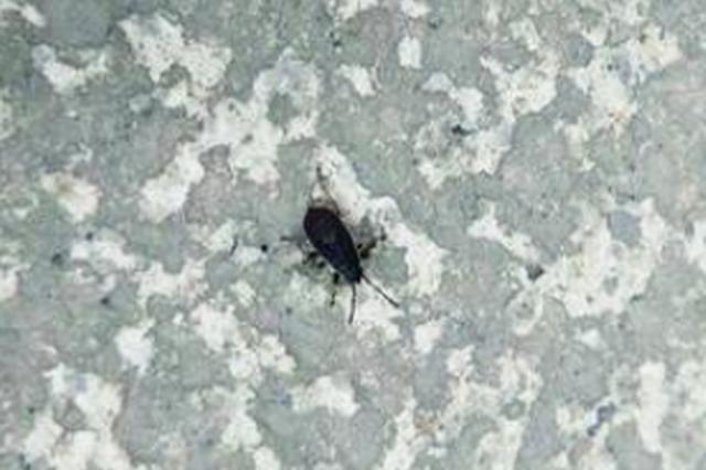 """灰黑色甲壳虫大量""""入侵""""小区 长春12345很快解决了"""