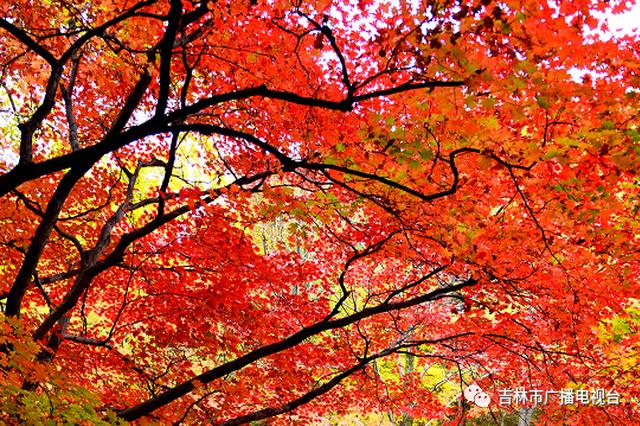 22.92亿元!国庆中秋吉林市旅游同比恢复七成以上