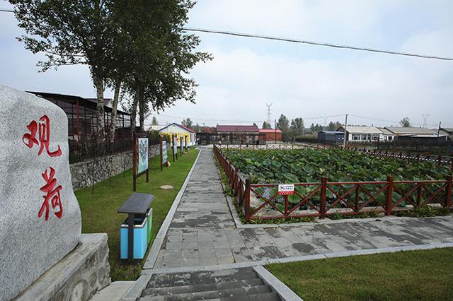 幸福吉林丨梅河口乡村美景耀金秋