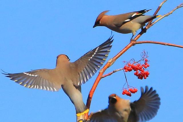 伊通河畔群鸟嬉戏