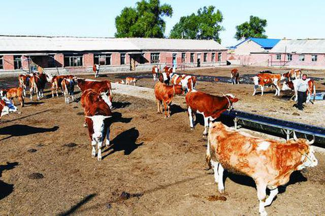 长春市牧业年产值预计可达554.4亿元 安全价优肉蛋
