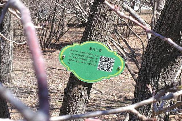 """長春上千棵行道樹有了""""身份證"""" 掃碼可了解相關知識"""