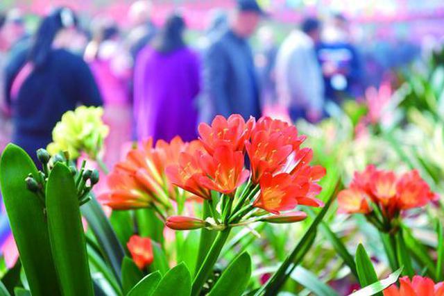 第十六届中国长春君子兰节开幕