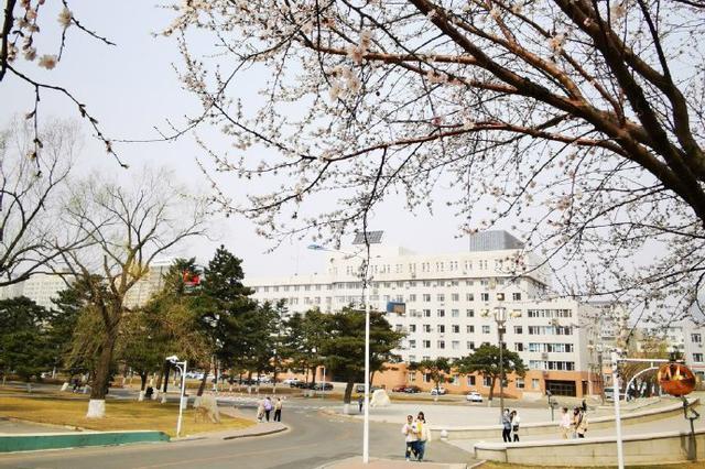 东北师范大学桃花盛开!