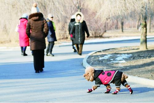 公园内自由奔跑的小狗。 石天蛟 摄