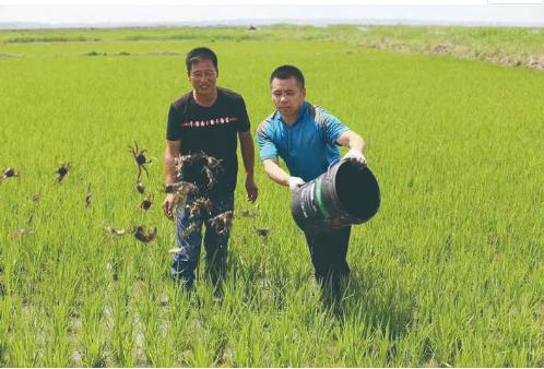"""在农安县沙岗村,绿色有机""""蟹田米""""搭配肥硕味美的大河蟹,已成为成熟的生态种养模式。 梁闯 摄"""