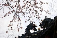 四月集安:花开正浓,春色正好