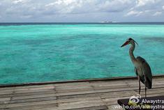 马尔代夫 印度洋上那一抹绿