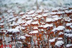 """一场大雪,把长春""""绣""""成水墨江南"""