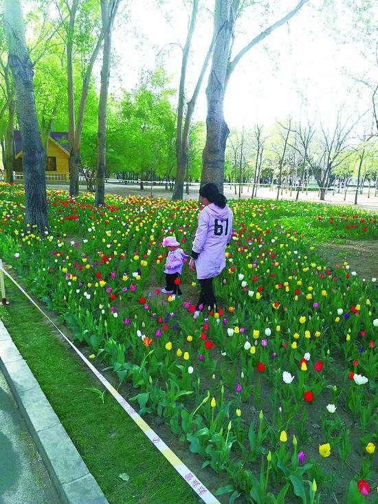 游客带孩子走进花丛,这行为不美。 张琳婉 摄