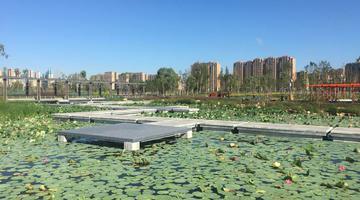 长春南溪湿地公园蓝天白云绿树相映成景