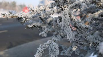 玉树琼花就在路两旁 长春上演冰雪奇缘