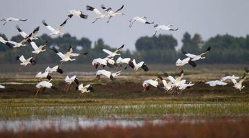 鹤乡白城——尽显自然生态之美