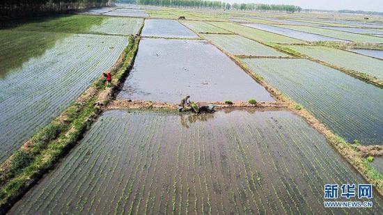 5月17日,镇赉县大屯镇的农民在田间插秧(无人机照片)。
