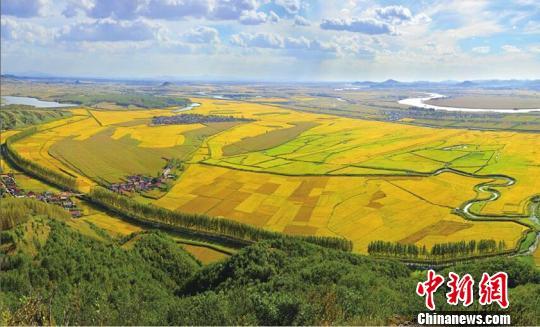 吉林舒兰的稻田(资料图) 王志苏 摄