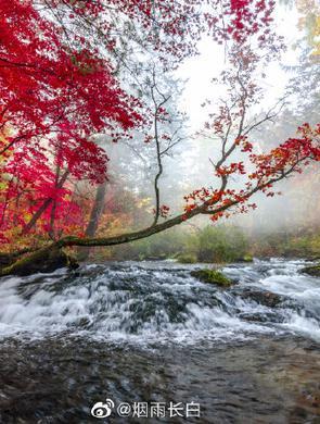 秋色长白山 色彩勾勒出的美景