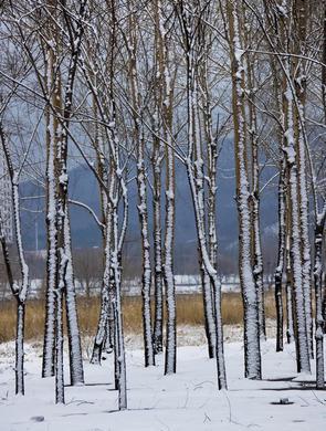 瑞雪如花 落滿江城