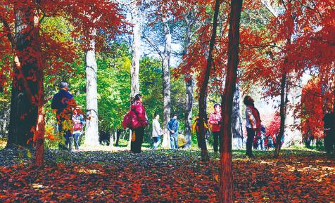 长春市公园打造秋叶景观供游客欣赏