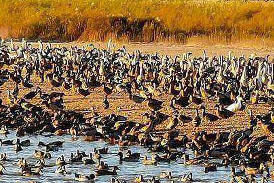 查干湖:打造鱼鸟天堂 共建绿水青山