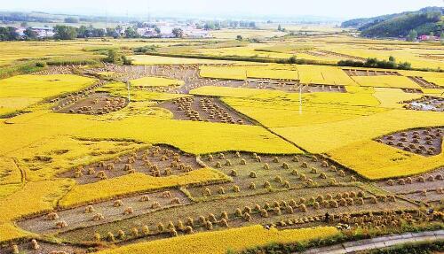 9月24日,东辽县安石镇千亩有机水稻迎来收割季。近年来,东辽县全面实施乡村振兴战略,不断加大特色农产品品牌培育工程,以推进农业产业升级,提高农业的综合效益和竞争力。