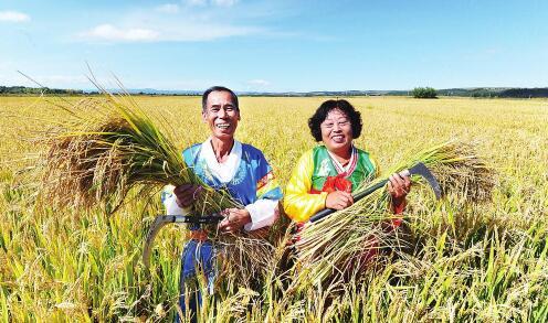 金秋时节,延边州和龙市光东村村民们迎来了又一个大丰收。图为朴忠烈、金贞淑夫妇抱着沉甸甸、金灿灿的水稻,喜悦之情溢于言表。