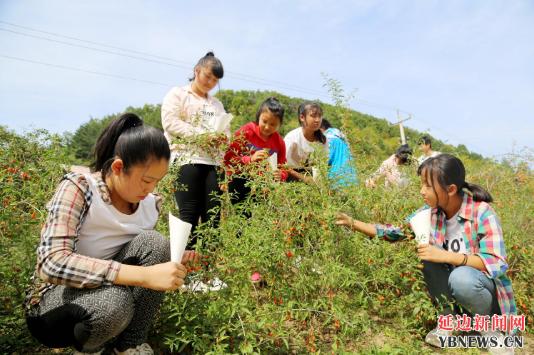 安图福兴村裕琅希望小学发挥农村学校的特色优势