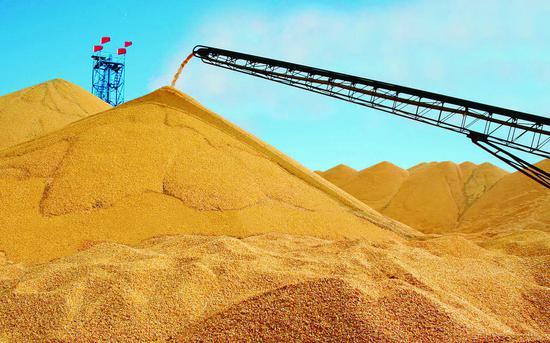改革开放以来,长春市粮食综合生产能力稳步提升。从改革开放初期不足27.5亿公斤稳步提升到90亿公斤的历史阶段水平。 (照片由市农委提供)