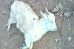 养殖场羊用药后陆续死亡 背后原因待调查