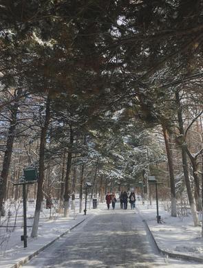 长春再迎降雪 雪后的街景