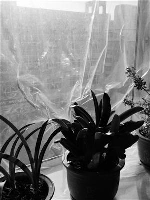 """为""""保温"""",窗户封上了塑料布。海涛 摄"""