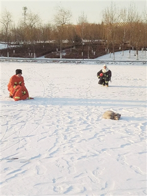 消防官兵在冰面上抓捕狐狸。海涛 摄