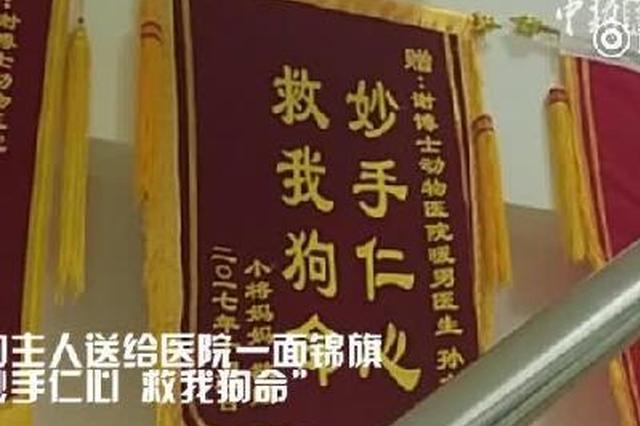 """长春一宠物医院获赠""""妙手仁心,救我狗命""""锦旗"""